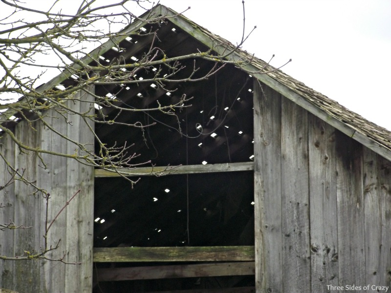 The barn is all but falling down and there is still hay in the loft begging for an afternoon nap to be had there.